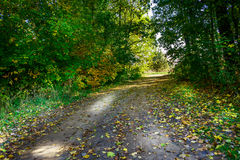 Lane in autumn wood. Stock Photos