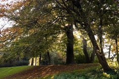 Lane with Beech trees in october Stock Photo