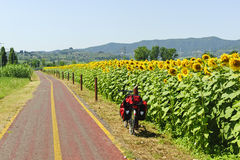 Lane for bicycles and sunflowers in Tuscany Stock Photography