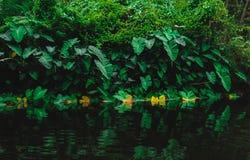 Lane Cove National Reserve Park. Kayaking Stock Photo