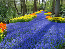 Lane of flowers in dutch spring garden Royalty Free Stock Photography