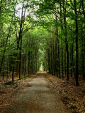 Lane in forest Stock Image