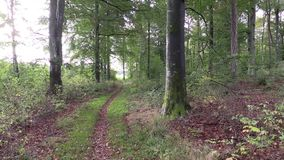 Lane in forest stock footage