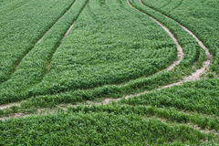 Lane in a green field of grass. Tractorlane in a green field of grass stock photo