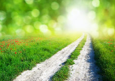 Lane in green meadow Royalty Free Stock Image