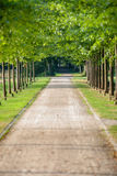 Lane with green trees along the footpath in park at sunny day, Stock Images