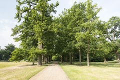 Lane with green trees Royalty Free Stock Images