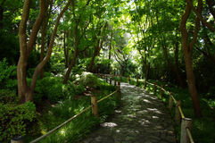 A Lane in Japanese tea garden stock photos