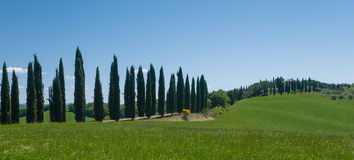 Lane lined with cypress trees in Tuscany Royalty Free Stock Photography