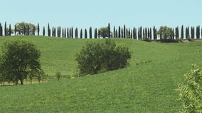 Lane lined with cypress trees in tuscany. Road lined with cypresses in tuscany near the city of siena under a blue sky stock video footage