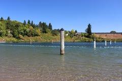 Lane lines of a lake in vancouver washington. A public entertainment park of vancouver washington stock photography