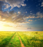 Lane in meadow and deep blue sky. Royalty Free Stock Images