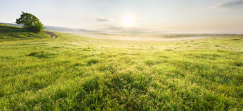 Lane in meadow and sunrise. Stock Photo