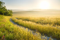 Lane in meadow and sunrise. Royalty Free Stock Photography