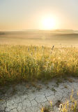 Lane in meadow and sunrise. Royalty Free Stock Photo