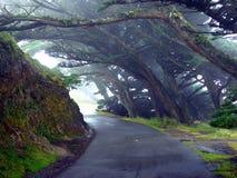 lane mgły drzewa zdjęcie royalty free