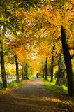 Lane in park with beech trees Stock Photos