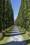 Lane in the park of the Greystone Mansion in Beverly Hills, Los Angeles, California. United States of American Royalty Free Stock Photography
