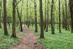 Lane path in green spring forest Royalty Free Stock Photography