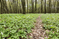 Lane path in green spring forest Stock Photos