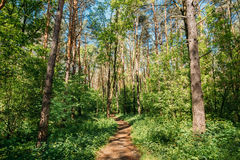 Lane, Path, Way For Light Walking In Summer Deciduous Forest Between Stock Photos