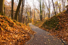 Lane with pavement in autumn park Stock Image
