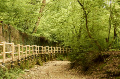 Lane Road, places of walks in the green nature Stock Image