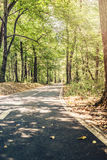 Lane running through the forest in summer. Cycling path royalty free stock photo