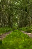 A lane surrounded by a thick forest royalty free stock photography