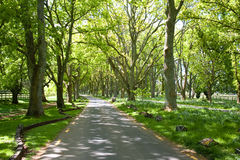 A Lane Though The Oaks. MW: - L/scape Royalty Free Stock Photo