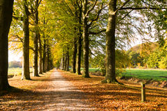 Lane with tree trunks in autumn, Netherlands Royalty Free Stock Photos