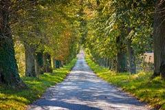 Lane through trees Stock Photo
