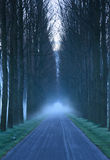 Lane of trees Royalty Free Stock Photography