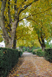 Lane with trees on graveyard. Lane with trees and brown leaves on graveyard stock image