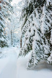 Lane among the trees in a snowy   forest Stock Images