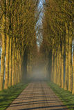 Lane of trees Stock Image
