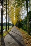 Lane with trees. In warm late afternoon sunlight Royalty Free Stock Images