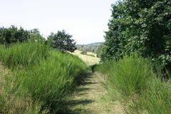 Lane. A trimmed from shrubs of narrow dirt road Royalty Free Stock Images