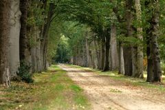 A lane with big old beech trees near the Eerde Castle in month of September. A lane with two rows of big old beech trees near the Eerde Castle in Overijssel. It` stock photography