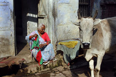 By-lane of Varanasi. February 11,2012 Benaras,Uttar Pradesh,India,Asia- A bull and an old woman in a by-lane of Benaras Royalty Free Stock Photography