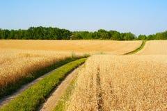 Lane through the wheat field Royalty Free Stock Image