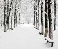 Lane in winter park Royalty Free Stock Images