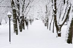 Lane in winter park Royalty Free Stock Photography