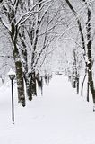 Lane in winter park. With snow covered trees Stock Photos