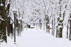Lane in winter park Stock Image