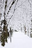 Lane in winter park Royalty Free Stock Photo