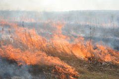 Lanes of the burning dry grass. Fire in the field, burning dry grass, fire lanes Stock Image