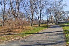 Lanet d'arbre et de promenade au Central Park Photo libre de droits