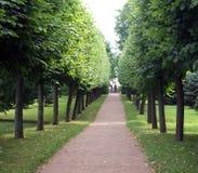 lanetrees Royaltyfri Foto