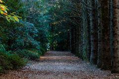 Laneway between trees and bushes Royalty Free Stock Images